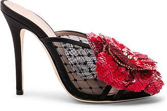 eebb06f9b4f Gedebe Shoes - ShopStyle