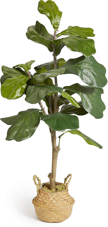 Marks and Spencer Large Fiddle Leaf Fig Tree