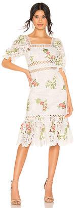Saylor Lottie Dress