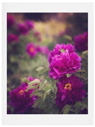 Catherine Mcdonald Peony Garden At Dayan Pagoda Art Print 11
