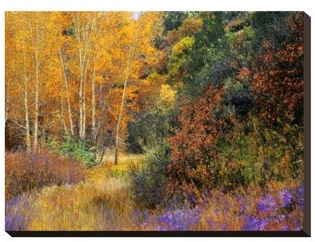 Lost Canyon Larkspurs I By Chris Vest Unframed Wall Canvas
