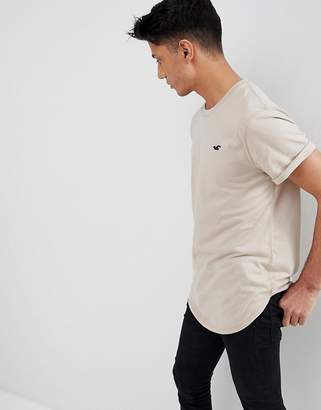 Hollister Curved Hem Crew Neck T-Shirt Seagull Logo In Taupe