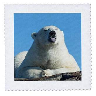 3D Rose Canada Nunavut Territory Polar Bear Sticks Out Tongue While Resting Square Quilt 25 x 25