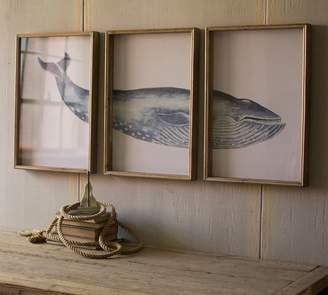 Pottery Barn Triptych Framed Whale Print