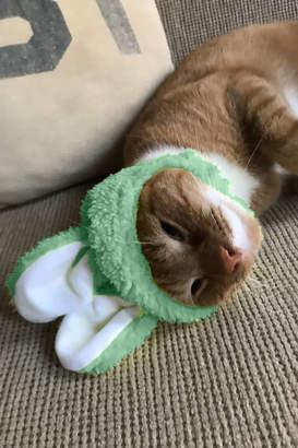 Bunny Ear Cat Cap