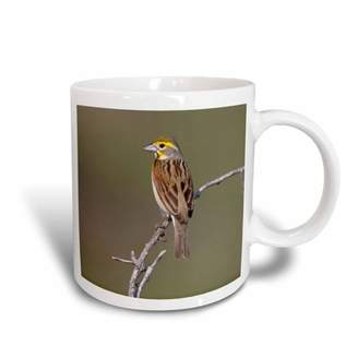 3dRose Dickcissel bird, male during Spring, Texas, USA - US44 LDI0853 - Larry Ditto, Ceramic Mug, 15-ounce