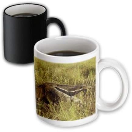 3dRose Giand Anteater.El Pantanal, Wetlands, Matto Grosso, Brazil., Magic Transforming Mug, 11oz