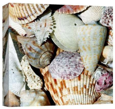 Shells By The Sea I Decorative Canvas Wall Art 16