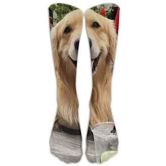 Golden Retriever Underwear Socks For Men Shopstyle Canada