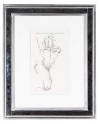 Framed Botanical Print