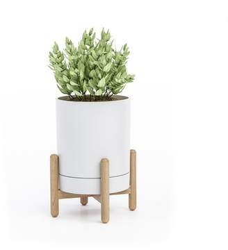 George Oliver Mauro Tabletop Plant Stand