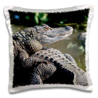 3dRose USA, Florida, Orlando, alligators basking in the sun. - Pillow Case, 16 by 16-inch