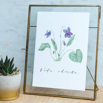 de Winton Paper co. Watercolour Violet Botanical Print