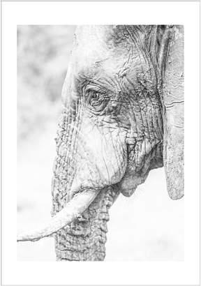 Casa Uno Elephant Side Framed Print, White Frame 113x160cm