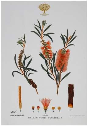 Maxwell & Williams Royal Botanic Garden Tea Towel 50x70cm Bottlebrush