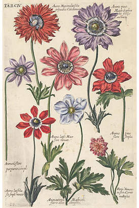 Hand-Colored Anemones