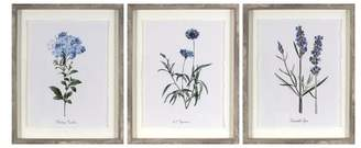 "Threshold Set of 3) 16""x20"" Framed Vintage Botanicals Decorative Wall Art - ThresholdTM"