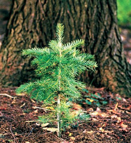 Go Zero Plant-a-Tree Charitable Contribution & Certificate