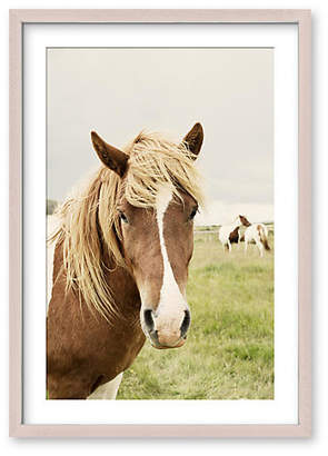 One Kings Lane Christine Flynn - Icelandic Horse Art