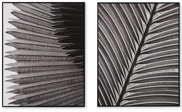 Madison Park Palm Fronds 2-Pc. Deco Box Print Set