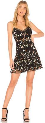 BB Dakota JACK by Chaka Dress