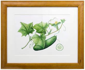 One Kings Lane Vintage Cucumber Watercolor by Nan Dedrick - 2001 - Ursus Books and Prints Art