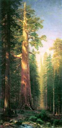 Mariposa The Museum Outlet - The Big Trees, Grove, California by Bierstadt - Poster Print Online Buy (24 X 32 inch)