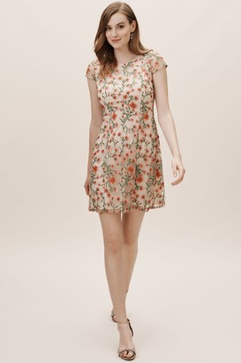 Adrianna Papell Perrie Dress