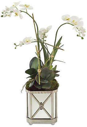 "John-Richard Collection John Richard 34"" Orchid Arrangement in Planter - Faux"