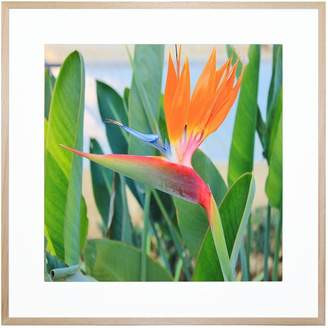 United Artworks Paradiso Acrylic Print With Frame