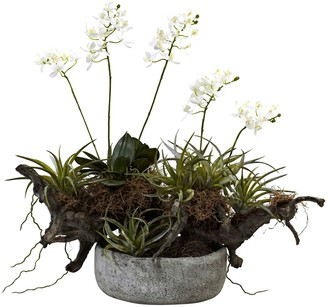Nearly Natural nearly natural Orchid & Succulent Garden Driftwood Decorative Arrangement