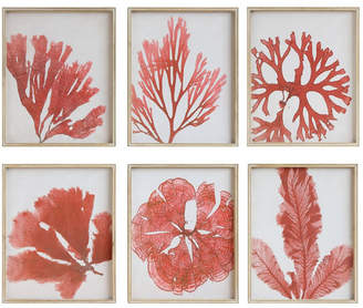 3r Studio Coral Image Wood Framed Wall Décor, Set of 6