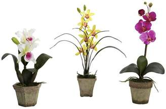 Bay Isle Home Pembroke Potted Orchid Mix
