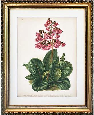 One Kings Lane Vintage Antique Floral Botanical Print 19th-C - Antiquarian Art Company