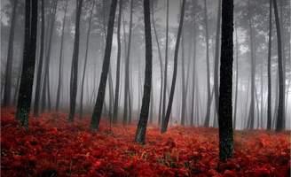 Art For Life Autumn Mist Photo Canvas