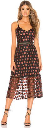 BB Dakota Jack by Magic Hour Dress