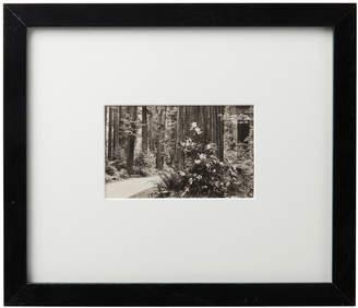 Rejuvenation Framed Postcard of Rhododendron Oregon