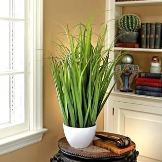Orren Ellis Desktop Foliage Grass in Pot