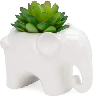 Torre & Tagus Designs Animal Garden Ceramic Elephant Potted Faux Succulent