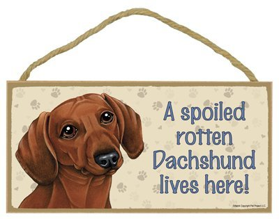 "Breed Dachshund (Reddish-brown color) - A spoiled ""your favoriate dog lives here! - Door Sign 5'' x 10''"
