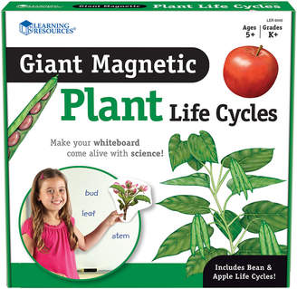 Educational Insights Giant Magnetic Plant Life Cycle