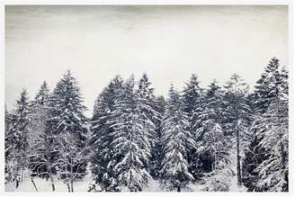 Pottery Barn Pacific Snow Paper Print By Lupen Grainne