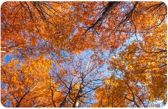 Bungalow Flooring Autumn Leaves Accent Mat Doormat