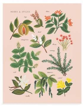 Rifle Paper Co. Herbs and Spices Art Print