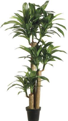 Bay Isle Home Tropical Dracaena Tree in Pot