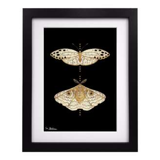 Coleman Louise Limited Edition Gold Moths Duo Art Print