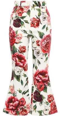 Dolce & Gabbana Floral-print Stretch Cotton-twill Kick-flare Pants