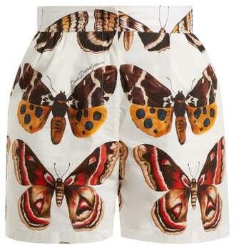 Dolce & Gabbana Butterfly Print Cotton Poplin Shorts - Womens - Brown White