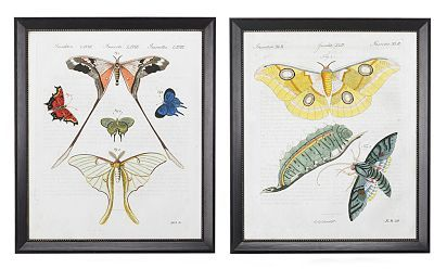 Antique Insect Studies