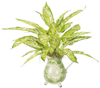 The Holiday Aisle Silver Queen Plant in Asian Pitcher